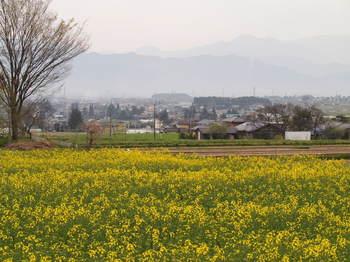 2012_04302012春信州0067-1.JPG